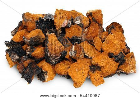 Chaga - Birch Mushroom