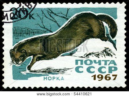 Vintage  Postage Stamp. Mink.