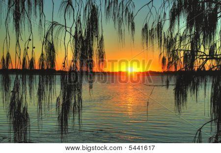 Casuarina Sunrise