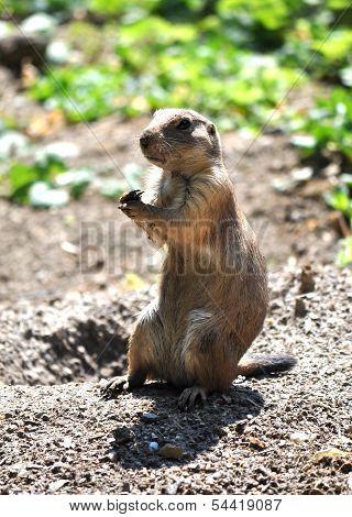 view of marmot