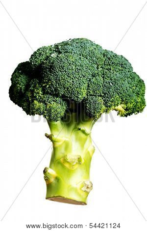 Green, fresh broccolli over white background.
