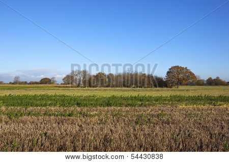 Small Woodland In Autumn