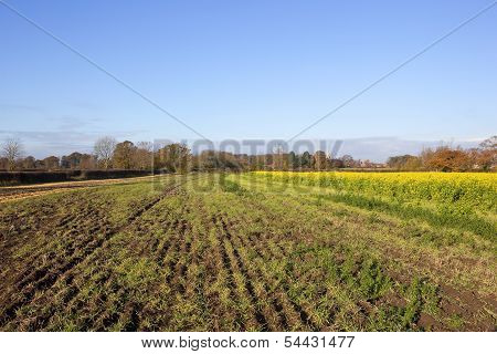 Agricultural Land With Village
