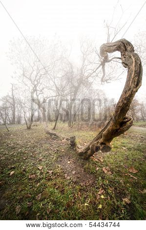 scary photo of a tree