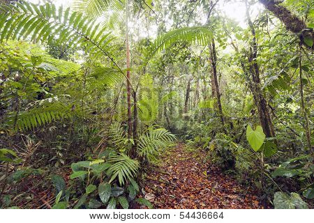 Path running through cloudforest