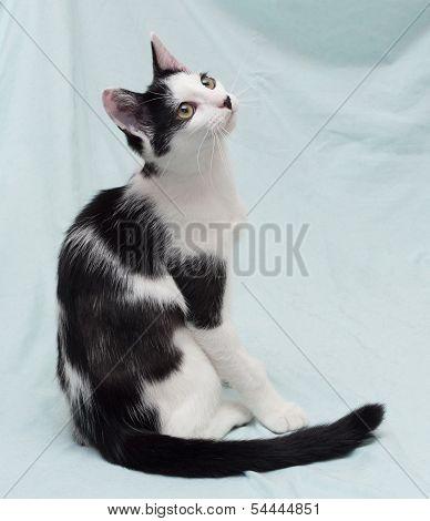 Skinny Black And White Kitten Sitting
