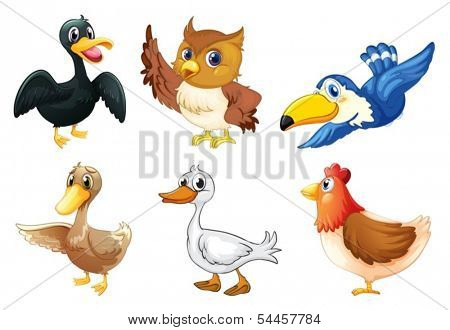 Illustration of a group of birds on a white background