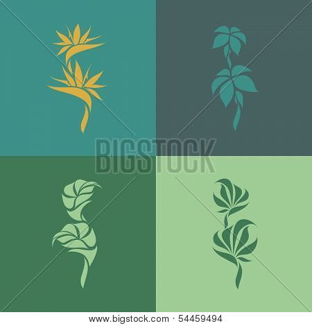 Tropical plants. Set of design elements. Vector illustration