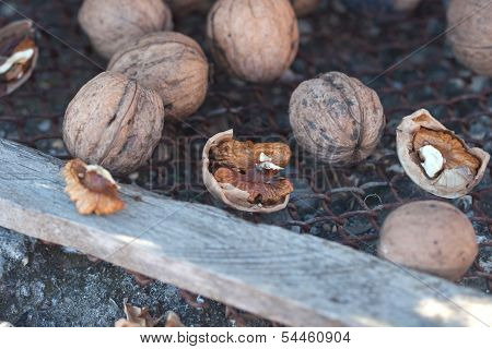 Safe And Crack Walnuts