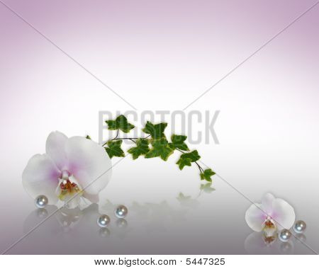 Floral Border Orchids, Ivy And Pearls