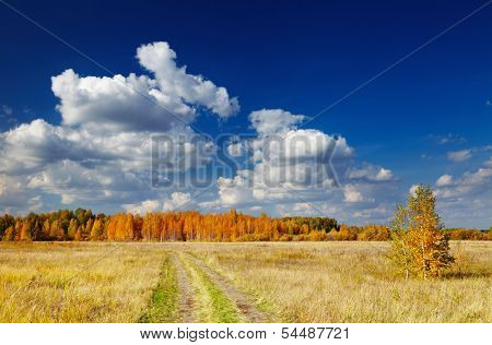Autumn landscape with forest and blue sky