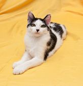 stock photo of heartwarming  - Skinny black and white kitten lying on golden background - JPG