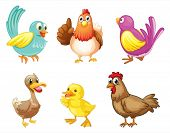 picture of laying eggs  - Illustration of the different kind of birds on a white background - JPG