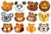 foto of tigers-eye  - Illustration of the head of the different animals on a white background - JPG