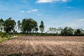 image of cassava  - tapioca plantation manioc plantation cassava plantation agriculture cultivated grow growing growth natural nature tree soil row