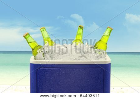 Beer Bottles In Ice Box
