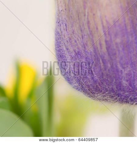 Crocus Frames Yellow Flower