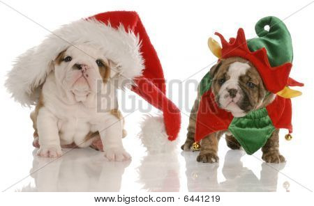 Bulldog Puppy Santa And Elf