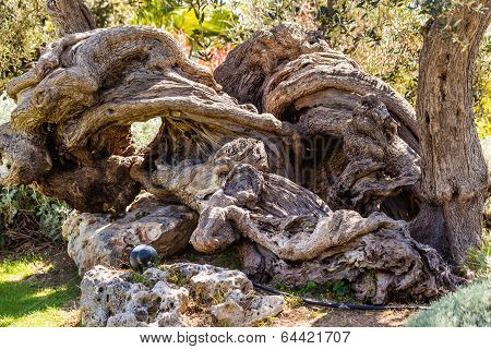 Amazing Tree Trunk