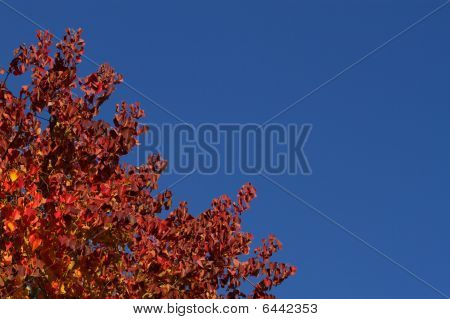 Red Fall Leaves Blue Sky
