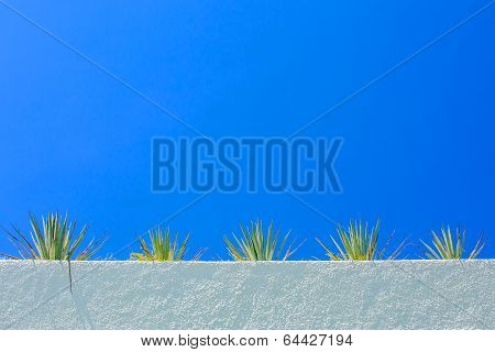Agave Plant And Blue Sky