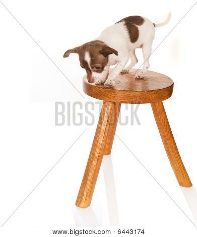 Dog With Vertigo