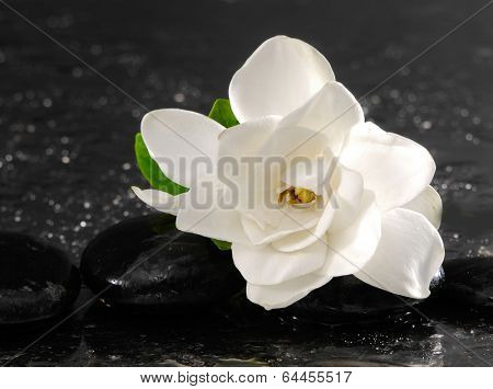 Single of white gardenia with therapy stones