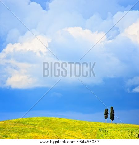 Tuscany, Two Lonely Cypress Trees And Rural Hill. Siena, Orcia Valley, Italy.