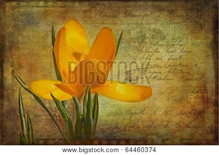 Vintage Yellow Crocus