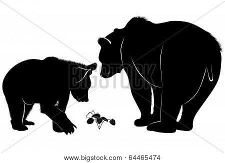 bears wildlife mammal  wild nature