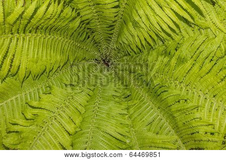 Pattern Of Fern Leaves And Stalks