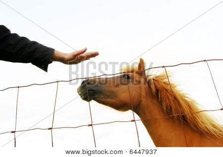 Isolated Horse Being Petted