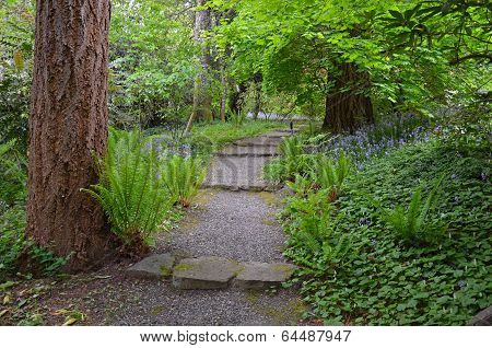 Pathway Through Green Forest