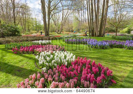Keukenhof- Tulip Garden- Netherlands
