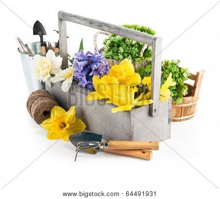 Flowers in the wooden case and working tools for flower-growing. Isolated on white background