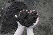 foto of rich soil  - Soil in the open palm dry soil on background - JPG