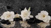 stock photo of gardenia  - Three gardenia flower and candle on pebbles  - JPG