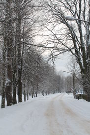 stock photo of paysage  - winter paysage into old park  snow covering alley from trees - JPG
