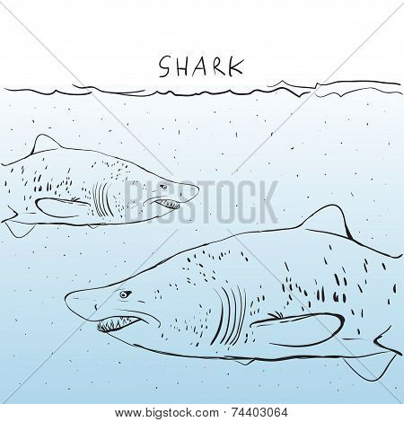 Two Great White Shark In The Water. Sketch. Black Outline On A Blue Background.