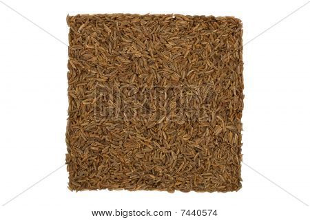 Dried Caraway