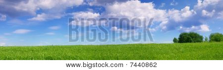 Panoramic Landscape Of Green Summer Meadow