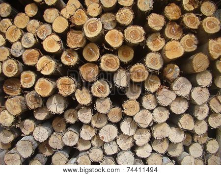 Stacked Sort Pine Timber