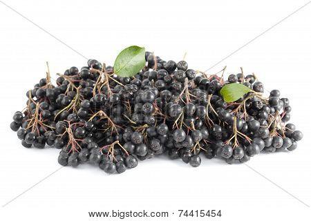 Black Aronia