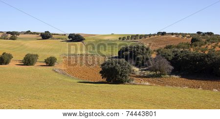 Panoramic Of The Fields In Castile-la Mancha, Spain..