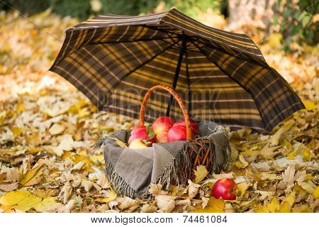 basket with apples under umbrella on autumn leaves