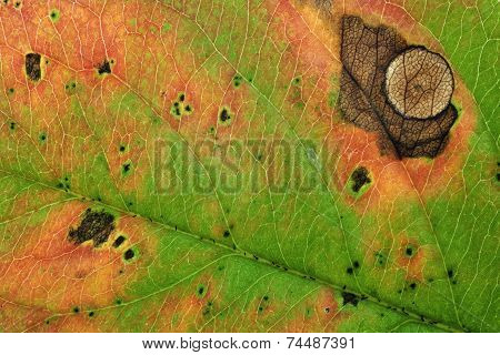 close up of autumn leave