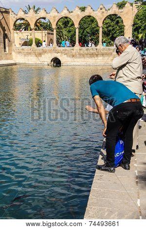 Pilgrims And Tourists Feed The Koi Carp