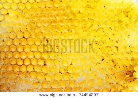 Bee hive texture