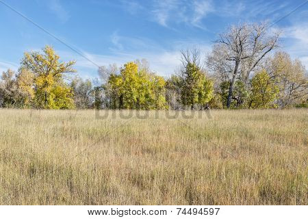prairie fall scenery in northern Colorado with some trees in background