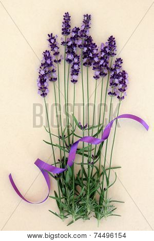 Lavender herb flowers with purple ribbon over mottled cream background. Lavandula angustifolia.